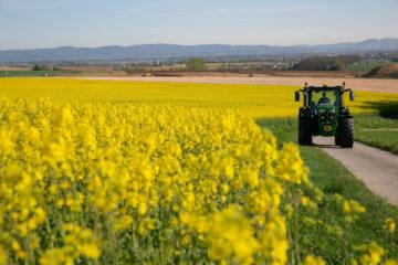 Traktor vor gelb blühendem Feld