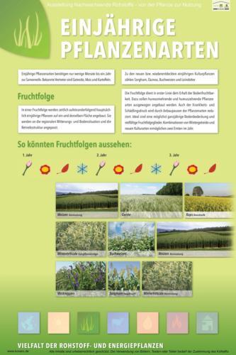 Abteilung 3: Einjährige Pflanzenarten