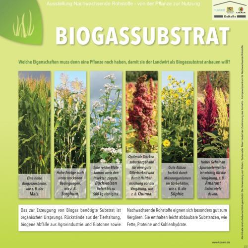 Abteilung 3: Biogas