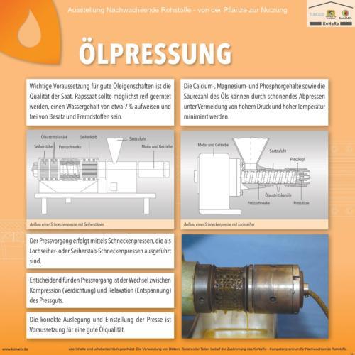 Abteilung 5: Ölpressung