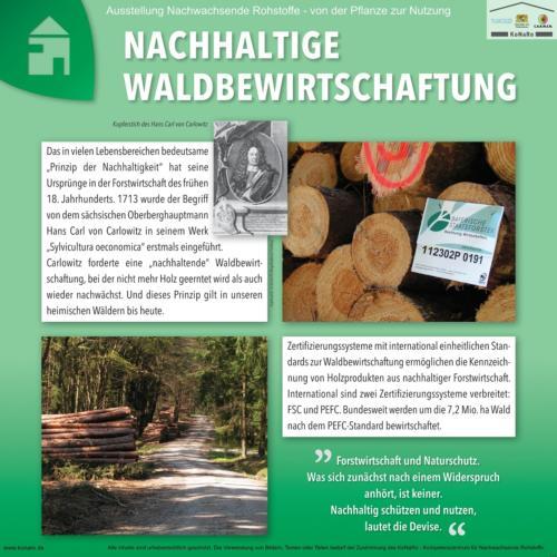 Abteilung 7: Nachhaltige Waldbewirtschaftung